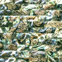 Paua Shell Tiles JPST001