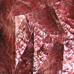Violet Oyster Shell Tiles